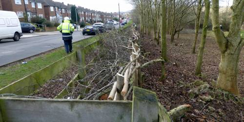 Hedge laying 4&5