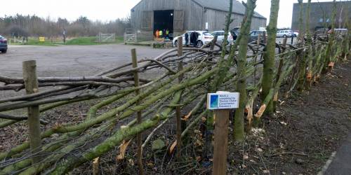 Hedge Laying Broadfields